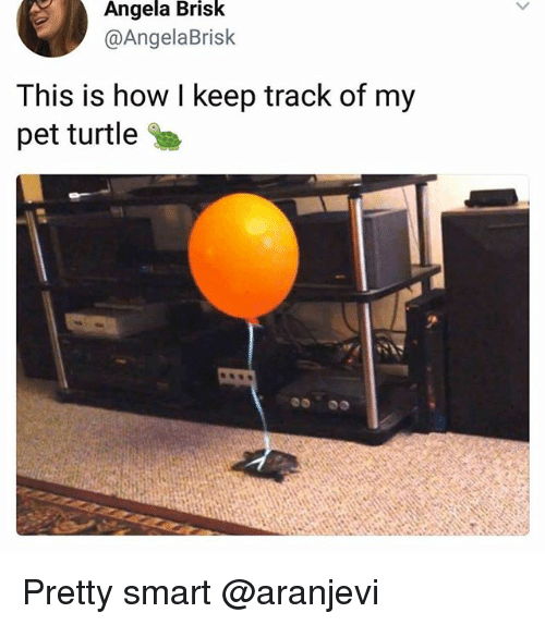 Funny, Meme, and Turtle: Angela Brisk  @AngelaBrisk  This is how l keep track of my  pet turtle Pretty smart @aranjevi