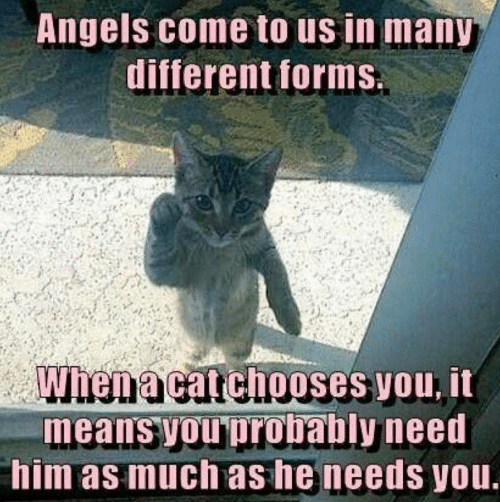 Memes, Angels, and 🤖: Angels come to us in many  different forms  When a catchooses you, it  means youprobably need  him as much as he needs you.