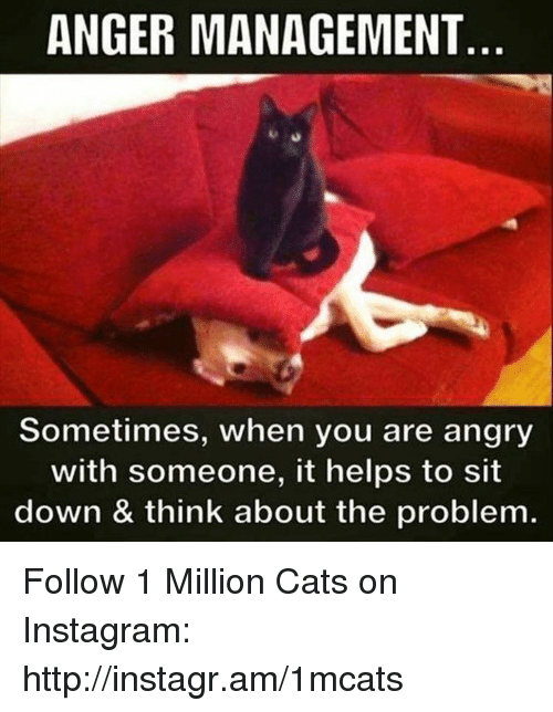 Memes, Angry, and Anger Management: ANGER MANAGEMENT  Sometimes, when you are angry  with someone, it helps to sit  down & think about the problem. Follow 1 Million Cats on Instagram: http://instagr.am/1mcats