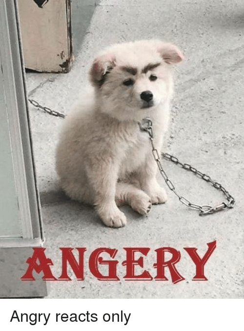 angery angry reacts only 17109259 angery angry reacts only dogs meme on me me