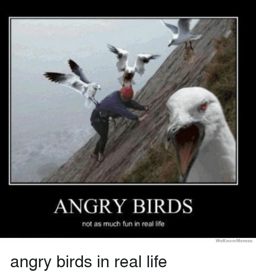angry birds not as much fun in real life we 2986629 ✅ 25 best memes about meme angry meme angry memes,Angry Meme