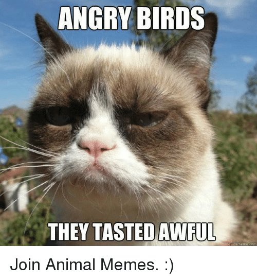 Grumpy Cat, memes.com, and meme.com: ANGRY BIRDS  THEY TASTED AWFUL  quick meme com Join Animal Memes. :)