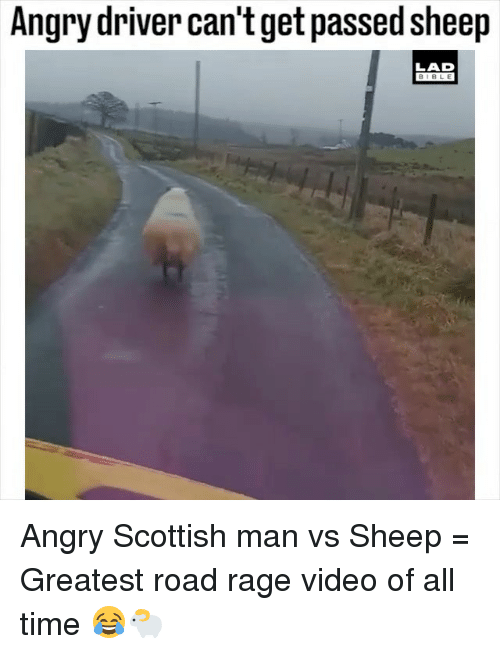 Memes, Bible, and Time: Angry driver can't get passed sheep  LAD  BIBLE Angry Scottish man vs Sheep = Greatest road rage video of all time 😂🐑