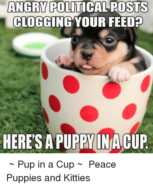 angry political posts clogging your feedp heres a puppy inia 14829315 angry political posts clogging your feedp heres a puppy inia cup