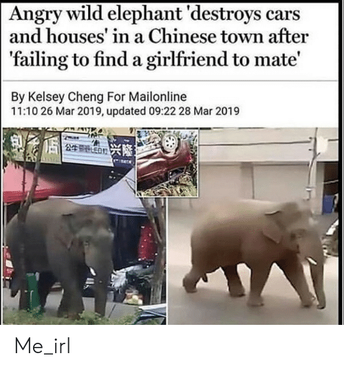 Cars, Chinese, and Elephant: Angry wild elephant 'destroys cars  and houses' in a Chinese town after  'failing to find a girlfriend to mate'  By Kelsey Cheng For Mailonline  11:10 26 Mar 2019, updated 09:22 28 Mar 2019  249 ED Me_irl