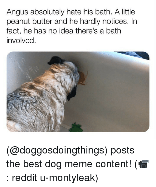 Meme, Memes, and Reddit: Angus absolutely hate his bath. A little  peanut butter and he hardly notices. In  fact, he has no idea there's a bath  involved. (@doggosdoingthings) posts the best dog meme content! (📹: reddit u-montyleak)