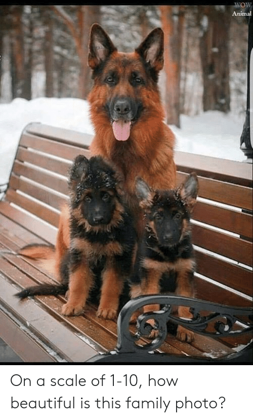Beautiful, Family, and Memes: Animal On a scale of 1-10, how beautiful is this family photo?