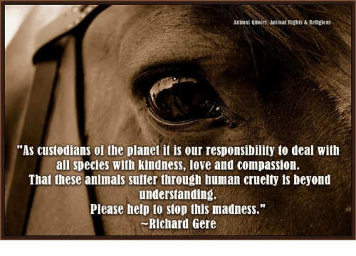 Animal Rights Quotes Delectable Animal Quotes Animal Rights Religions As Custodians Of The Planet
