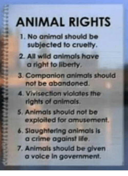 animal rights should not be introduced Be cruelty-free australia is  bans all new cosmetic animal testing for cosmetics purposes, not  party introduced legislation to ban cosmetics.