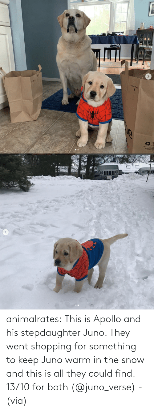 Instagram, Shopping, and Target: animalrates:  This is Apollo and his stepdaughter Juno. They went shopping for something to keep Juno warm in the snow and this is all they could find. 13/10 for both‬ (@juno_verse) - (via)