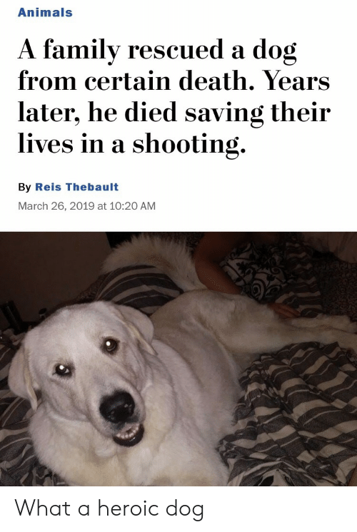 Animals, Death, and Dog: Animals  A familv rescued a dog  from certain death. Years  later, he died saving their  lives in a shooting.  By Reis Thebault  March 26, 2019 at 10:20 AM What a heroic dog