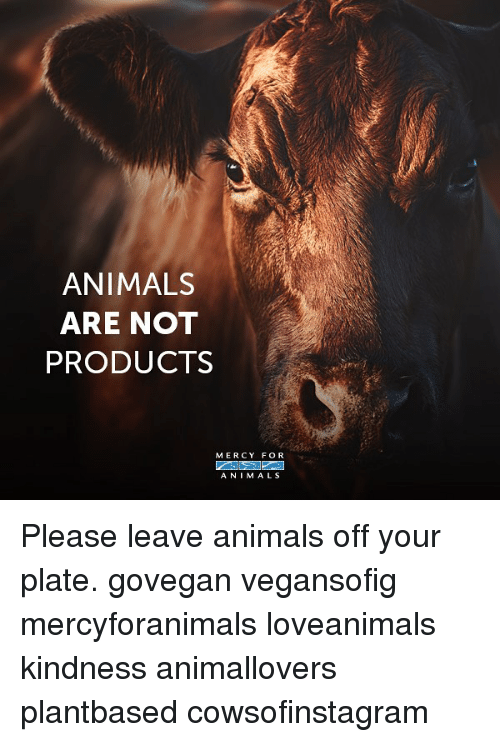 Animals, Memes, and Kindness: ANIMALS  ARE NOT  PRODUCTS  MERCY FOR  ANIMALS Please leave animals off your plate. govegan vegansofig mercyforanimals loveanimals kindness animallovers plantbased cowsofinstagram