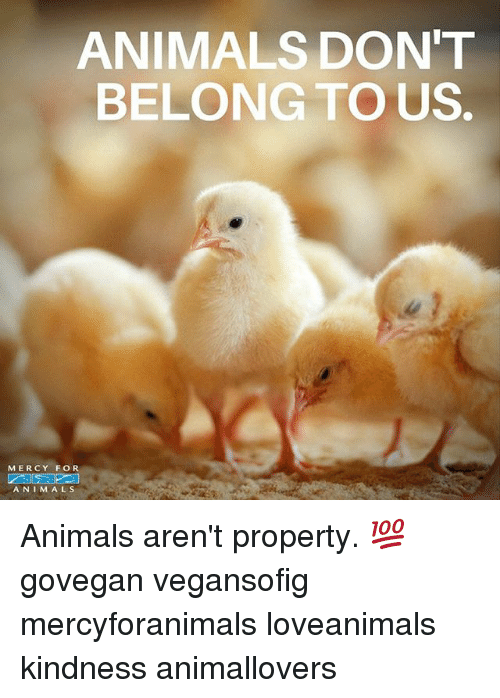 Animals, Memes, and Kindness: ANIMALS DON'T  BELONG TO US.  MERCY FOR  A N I M A L S Animals aren't property. 💯 govegan vegansofig mercyforanimals loveanimals kindness animallovers