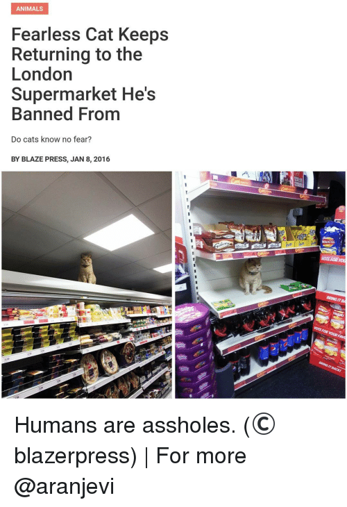 Best Memes About Blaze Blaze Memes - Fearless cat keeps returning to the london supermarket hes banned from
