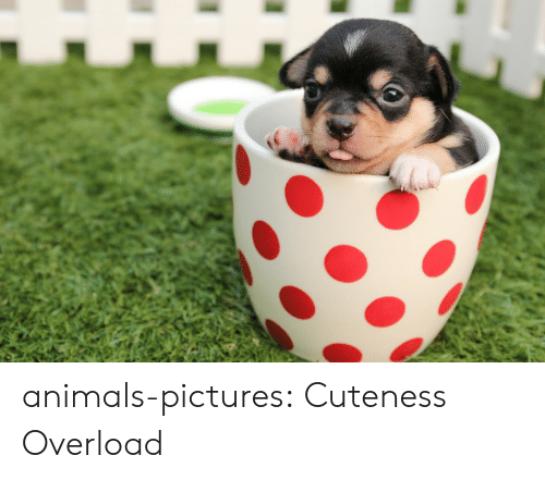 Animals, Tumblr, and Blog: animals-pictures:  Cuteness Overload