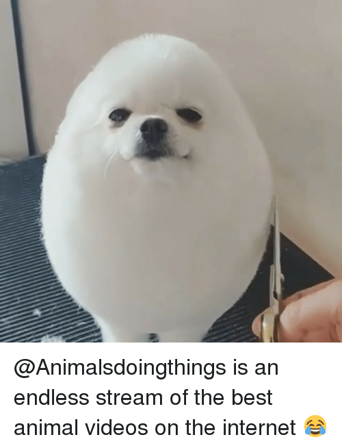 Internet, Memes, and Videos: @Animalsdoingthings is an endless stream of the best animal videos on the internet 😂