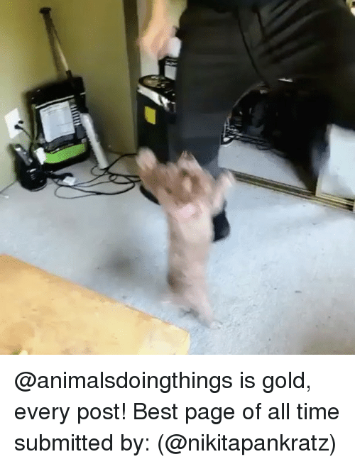 Memes, Best, and Time: @animalsdoingthings is gold, every post! Best page of all time submitted by: (@nikitapankratz)
