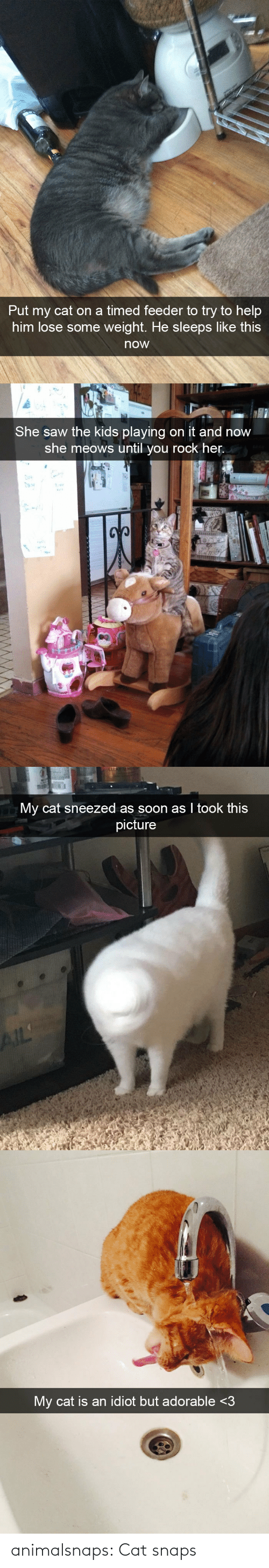 Target, Tumblr, and Blog: animalsnaps:  Cat snaps