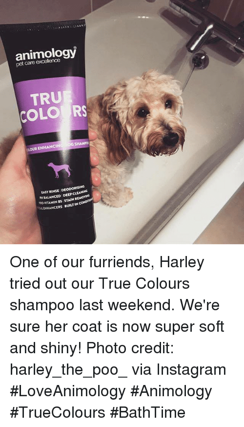 Instagram, Memes, and True: animologv  pet care excellence  TRU  COLO RS  OLOUR ENHANCINOG SHAMPO  EASY RINSE DEODORİSİNG  PH BALANCED DEEP CLEANING  RO-VITAMIN Bs STAIN REMOVING  ENHANCERS BUILT IN CoN One of our furriends, Harley tried out our True Colours shampoo last weekend. We're sure her coat is now super soft and shiny!  Photo credit: harley_the_poo_ via Instagram  #LoveAnimology #Animology #TrueColours #BathTime