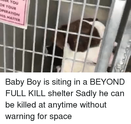 Memes, Space, and Sad: ank You  OR YOUR  OPERATION  HIS MATTER Baby Boy is siting in a BEYOND FULL KILL shelter Sadly he can be killed at anytime without warning for space