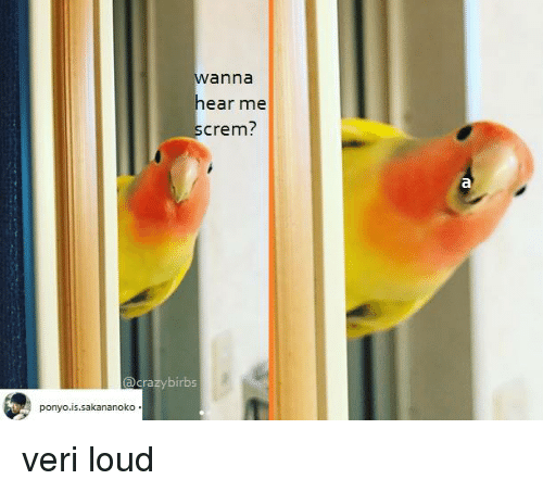 Anna, Ponyo, and Loud: anna  ear me  crem?  acrazybirbs  ponyo.is.sakananoko veri loud