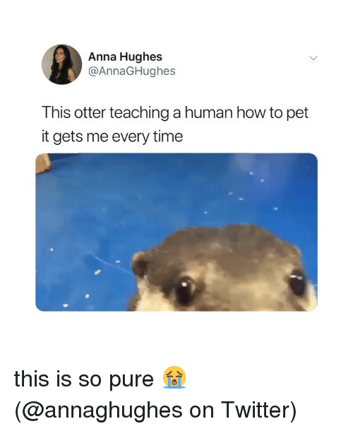 Anna, Memes, and Twitter: Anna Hughes  @AnnaGHughes  This otter teaching a human how to pet  it gets me every time this is so pure 😭 (@annaghughes on Twitter)