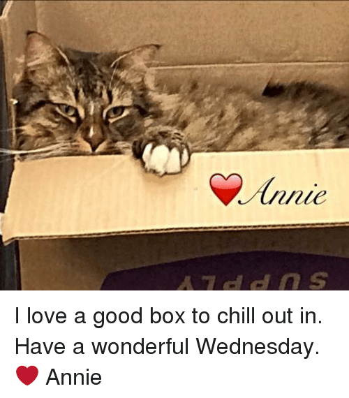 Boxing, Chill, and Memes: Annie  Junie  A7ddns I love a good box to chill out in. Have a wonderful Wednesday. ❤ Annie