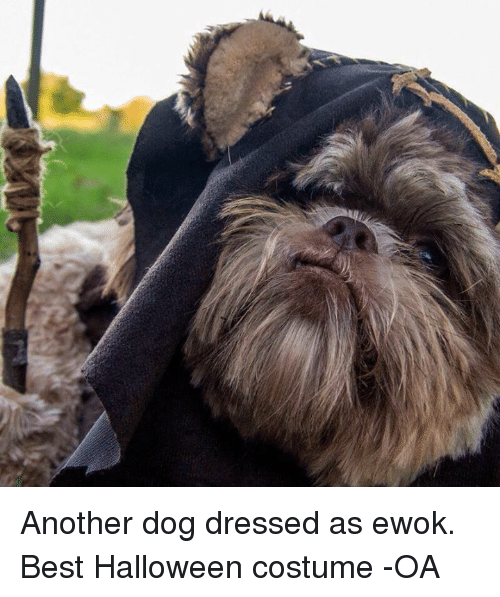dogs halloween and star wars another dog dressed as ewok best halloween