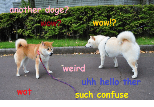 hello this is doge. confused, doge, and hello: another doge weird uhh hello ther wot such confuse this is h