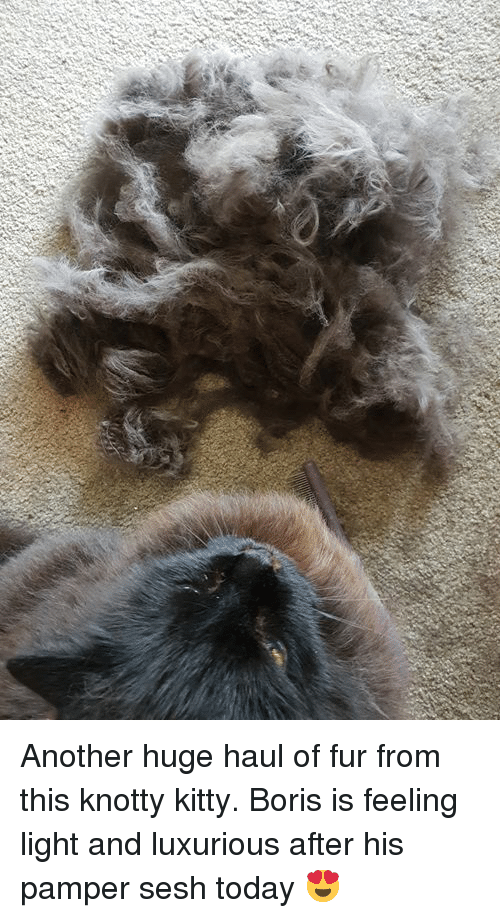 Another Huge Haul Of Fur From This Knotty Kitty Boris Is Feeling