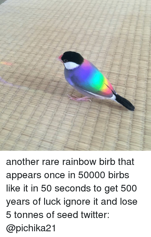 Twitter, Rainbow, and Luck: another rare rainbow birb that appears once in 50000 birbs like it in 50 seconds to get 500 years of luck  ignore it and lose 5 tonnes of seed  twitter: @pichika21