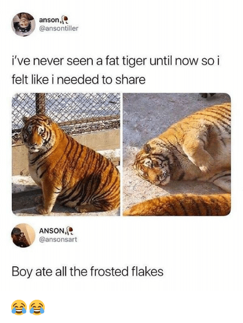 Anson Ive Never Seen A Fat Tiger Until Now So I Felt Like I Needed