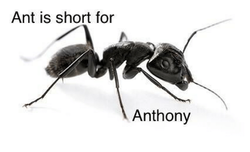 Dank Memes, Ant, and For: Ant is short for  Anthony