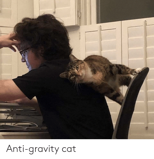 Gravity, Anti, and Cat: Anti-gravity cat