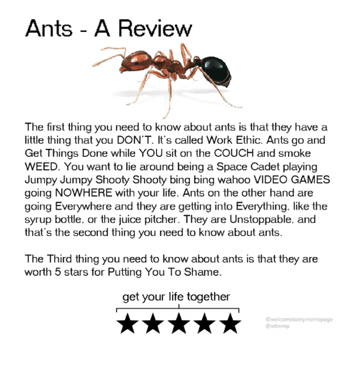 Dank, Juice, and Life: Ants - A Revievw  The first thing you need to know about ants is that they have a  little thing that you DON'T. It's called Work Ethic. Ants go and  Get Things Done while YOU sit on the COUCH and smoke  WEED. You want to lie around being a Space Cadet playing  Jumpy Jumpy Shooty Shooty bing bing wahoo VIDEO GAMES  going NOWHERE with your life. Ants on the other hand are  going Everywhere and they are getting into Everything. like the  syrup bottle, or the juice pitcher. They are Unstoppable, and  that's the second thing you need to know about ants  The Third thing you need to know about ants is that they are  worth 5 stars for Putting You To Shame  get your life together  @welcometomymemepage  @wtmmp