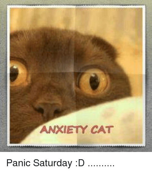 anxiety cat panic saturday d 9469944 ✅ 25 best memes about anxiety cat anxiety cat memes