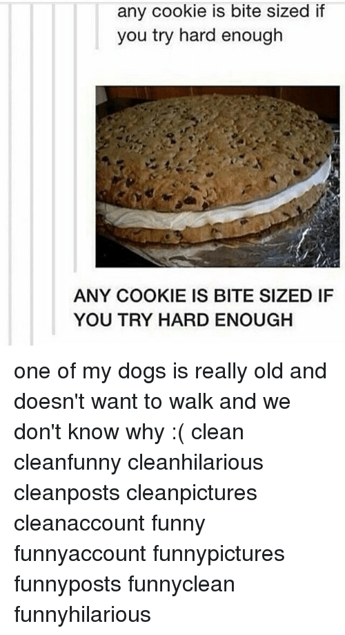 Dogs, Funny, and Memes: any cookie is bite sized if  you try hard enough  ANY COOKIE IS BITE SIZED IF  YOU TRY HARD ENOUGH one of my dogs is really old and doesn't want to walk and we don't know why :( clean cleanfunny cleanhilarious cleanposts cleanpictures cleanaccount funny funnyaccount funnypictures funnyposts funnyclean funnyhilarious