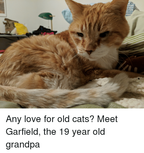 Cats, Love, and Grandpa: Any love for old cats? Meet Garfield, the 19 year old grandpa