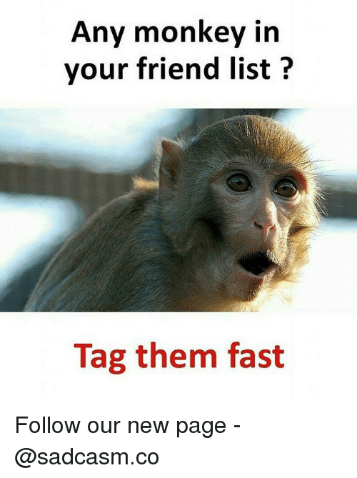 Memes, Monkey, and 🤖: Any monkey in  your friend list?  Tag them fast Follow our new page - @sadcasm.co