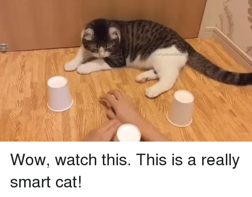 Memes, 🤖, and Smart: any nowt Wow, watch this. This is a really smart cat!