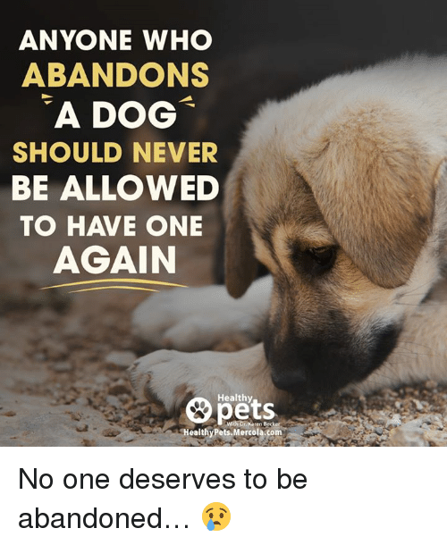 Memes, Pets, and Never: ANYONE WHO  ABANDONS  A DOG  SHOULD NEVER  BE ALLOWED  TO HAVE ONE  AGAIN  8 pets  A  Healthy Pets Mercola com No one deserves to be abandoned… 😢