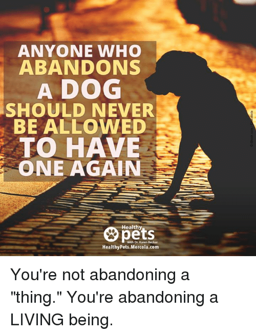 """Memes, Living, and Never: ANYONE WHO  ABANDONS  A DOG  SHOULD NEVER  BE ALLOWED  TO HAVE  ONE AGAIN  Healthy  With Dr. Karen Becker  HealthyPets.Mercola.com You're not abandoning a """"thing."""" You're abandoning a LIVING being."""