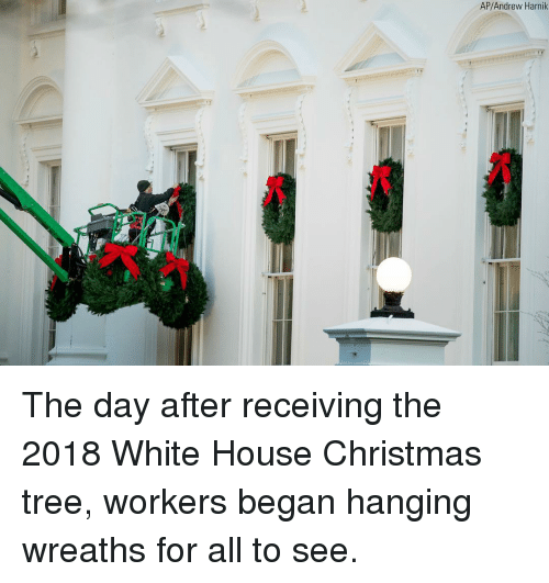 Christmas, Memes, and White House: AP/Andrew Harnik The day after receiving the 2018 White House Christmas tree, workers began hanging wreaths for all to see.