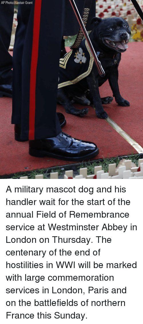 Memes, France, and London: AP Photo/Alastair Grant A military mascot dog and his handler wait for the start of the annual Field of Remembrance service at Westminster Abbey in London on Thursday. The centenary of the end of hostilities in WWI will be marked with large commemoration services in London, Paris and on the battlefields of northern France this Sunday.