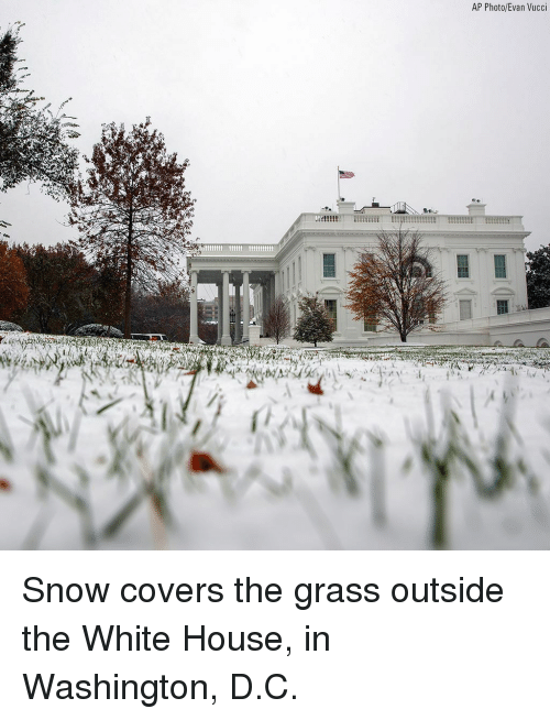 Memes, White House, and Covers: AP Photo/Evan Vucci Snow covers the grass outside the White House, in Washington, D.C.