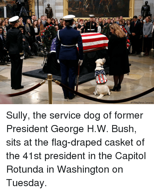 Memes, George H. W. Bush, and 🤖: AP Photo/Patrick Semansky Sully, the service dog of former President George H.W. Bush, sits at the flag-draped casket of the 41st president in the Capitol Rotunda in Washington on Tuesday.