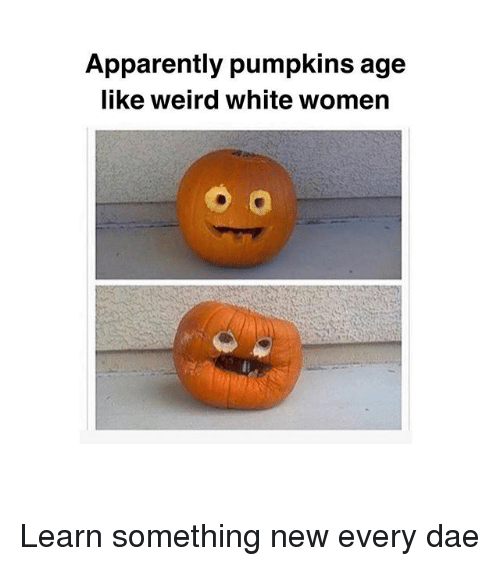 Apparently, Memes, and Weird: Apparently pumpkins age  like weird white womern Learn something new every dae
