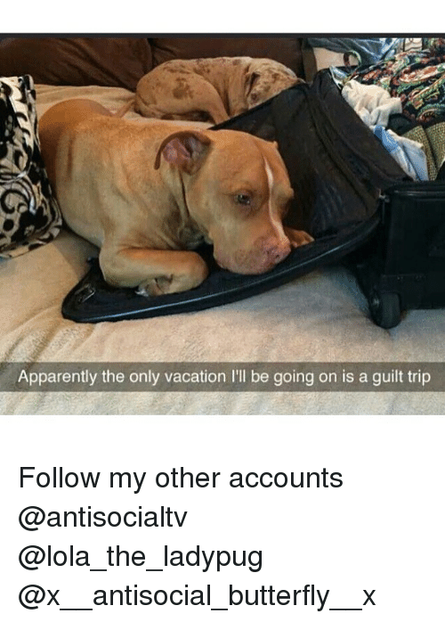 Apparently, Memes, and Butterfly: Apparently the only vacation I'l be going on is a guilt trip Follow my other accounts @antisocialtv @lola_the_ladypug @x__antisocial_butterfly__x