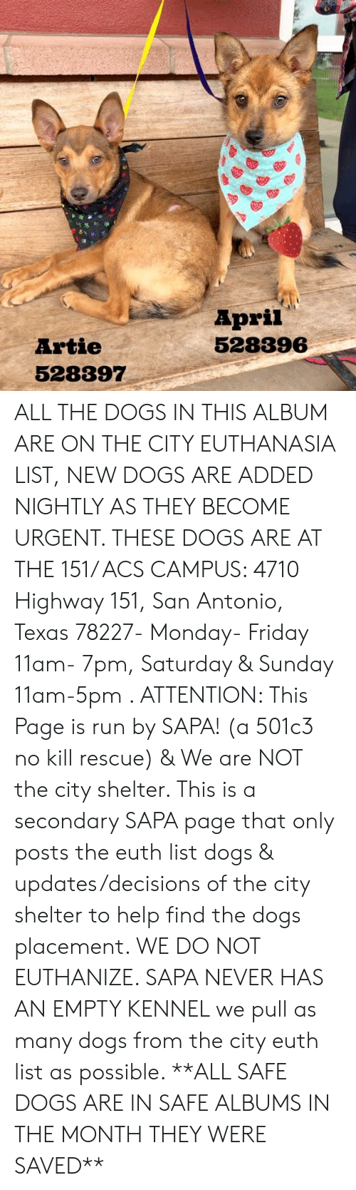 Dogs, Friday, and Memes: April  528396  Artie  528397 ALL THE DOGS IN THIS ALBUM ARE ON THE CITY EUTHANASIA LIST, NEW DOGS ARE ADDED NIGHTLY AS THEY BECOME URGENT.  THESE DOGS ARE AT THE 151/ ACS CAMPUS: 4710 Highway 151, San Antonio, Texas 78227- Monday- Friday 11am- 7pm, Saturday & Sunday 11am-5pm  .                                                                                                                                                                                                                                                     ATTENTION: This Page is run by SAPA! (a 501c3 no kill rescue) & We are NOT the city shelter. This is a secondary SAPA page that only posts the euth list dogs & updates/decisions of the city shelter to help find the dogs placement. WE DO NOT EUTHANIZE.  SAPA NEVER HAS AN EMPTY KENNEL we pull as many dogs from the city euth list as possible.      **ALL SAFE DOGS ARE IN SAFE ALBUMS IN THE MONTH THEY WERE SAVED**
