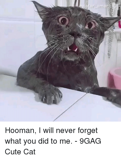 9gag, Cute, and Memes: ar amar Hooman, I will never forget what you did to me. - 9GAG Cute Cat